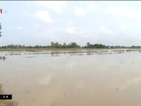 Hơn 560 hộ dân tại Cần Thơ bị ảnh hưởng bởi dự án đường ống dẫn khí