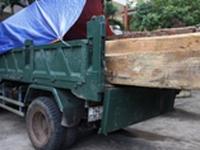 Hạt trưởng kiểm lâm là chủ của hơn 5,3m3… gỗ lậu