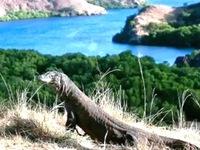 Đảo rồng Komodo - Điểm nhấn du lịch của Indonesia