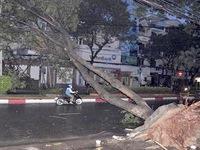 Kiến nghị lập quỹ hỗ trợ tai nạn do cây xanh đổ