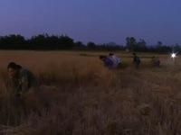Tránh nắng nóng, nông dân ra đồng từ… 3h sáng