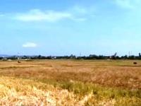 Quảng Trị: Hạn hán, hàng nghìn ha lúa có nguy cơ bỏ hoang