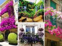 Những ý tưởng vườn hoa ban công tuyệt đẹp