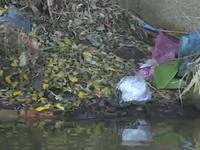 TT-Huế: Nguy cơ bệnh tật do ô nhiễm nguồn nước