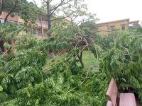 Hà Nội khẩn trương di dời cây đổ sau bão