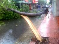 Hà Nội: Bão số 1 quật đổ hàng trăm cây xanh tại Hà Nội