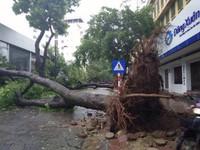 Cây đổ và gió lớn, người dân Hà Nội chật vật đi làm