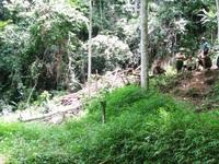 45 lính cứu hộ tham gia tìm kiếm 3 phu vàng mắc kẹt ở Thanh Hóa