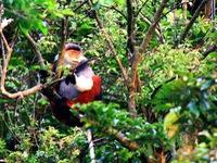Hé mở chân rết đường dây xâm hại Khu bảo tồn thiên nhiên Sơn Trà