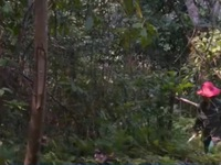 Hiệu quả giao khoán rừng tự nhiên cho người dân bảo vệ