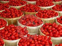 Cà chua trở thành xa xỉ phẩm do sâu bệnh tại Nigeria