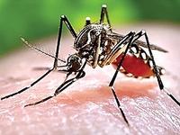Dịch bệnh Zika vẫn diễn biến phức tạp