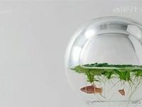 Waterscape – Bể cá trang trí bằng hình in 3D độc đáo
