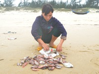 Người dân miền Trung nói gì sau khi có kết quả về nguyên nhân cá chết?