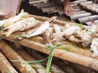 Hàng tấn cá chết trắng trên sông Mã, Thanh Hóa
