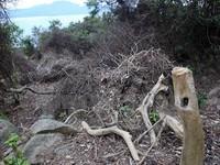 Vụ phá rừng Sơn Trà: Cách chức hạt trưởng, hạt phó kiểm lâm