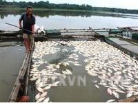 Nghiêm cấm sử dụng cá chết làm thực phẩm