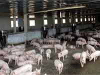 Nông dân Hà Tĩnh cam kết không sử dụng chất cấm chăn nuôi