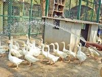 Ấn Độ: Động vật được tắm, ăn kem để... giải nhiệt mùa hè