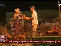 Kinh hoàng công nghệ tăng trọng cho gia súc, gia cầm