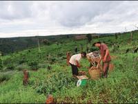 Đắk Nông thiếu vốn di dời 50.000 dân khi đóng cửa rừng