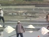 Chậm thu mua tạm trữ muối: Diêm dân gặp khó trong mùa mưa