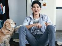 Song Joong Ki đóng vai khách mời trong phim của bạn thân