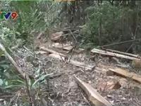 Xác định kẻ cầm đầu nhóm phá rừng tại Thủy điện Đồng Nai 5