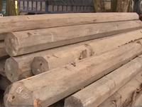Quảng Nam bắt vụ vận chuyển gỗ lậu lớn