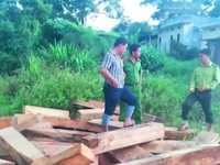 Hôm nay (25/8), họp báo công bố kết quả điều tra vụ phá rừng Pơ mu