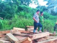 Vụ phá rừng Pơ mu: Đình chỉ 3 cán bộ biên phòng để điều tra