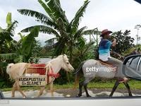 Độc đáo thư viện lưu động trên lưng ngựa tại Indonesia