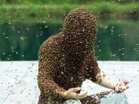 Lập kỷ lục với hơn 637.000 con ong đậu trên người