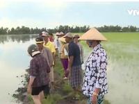 Kiên Giang: Mâu thuẫn con tôm - cây lúa vẫn chưa kết thúc