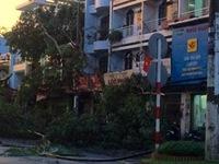 TP.HCM: Mưa lớn kèm giông lốc, nhiều cây xanh gãy đổ
