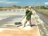 Bình Định: Tồn đọng gần 4.500 tấn muối