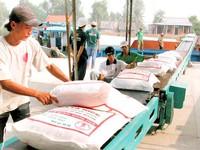 Hiệp hội Mía đường Việt Nam lo dư 200.000 tấn đường