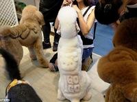 Dịch vụ cắt tỉa lông độc, lạ cho thú cưng