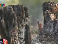 Báo động đỏ nạn chặt phá rừng ở Đăk Lăk