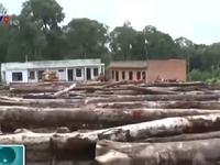 Mở rộng điều tra vụ phá rừng tại Lâm Đồng: Có dấu hiệu buông lỏng quản lý?