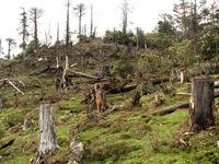 Đóng cửa rừng: Đại ngàn Tây Nguyên sẽ ngừng chảy máu?