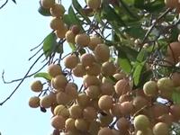 Nông dân Quảng Trị phát triển rau quả sạch
