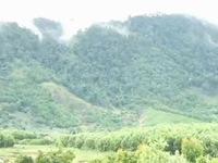 Khôi phục rừng để ứng phó với biến đổi khí hậu