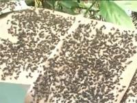 Đồng Tháp: Người dân mất ăn, mất ngủ vì ruồi
