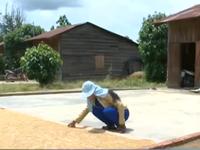 Lâm Đồng: Xây dựng sân sạch cho đồng bào dân tộc thiểu số