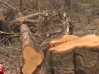 Phản hồi về phóng sự điều tra phá rừng ở Đăk Lăk: VTV đưa tin trung thực, không dàn dựng!