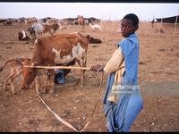 Cuộc chiến chống chế độ nô lệ tại Mauritania