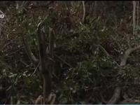Đà Nẵng thu hồi toàn bộ đất giao khoán xảy ra phá rừng