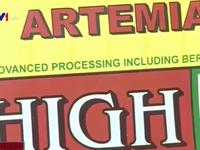 Áp thuế nhập khẩu 3 trứng Artemia: DN phản đối quyết liệt