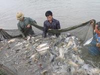 Tổng Cục Thủy sản công bố hơn 800 sản phẩm cấp phép khống